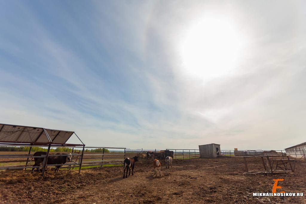 Отдых с детьми Чебоксары Страусиная ферма