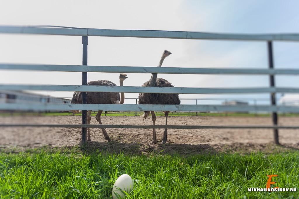 Семейный отдых Страусиная ферма Чебоксары
